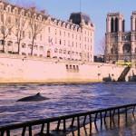 BALEINE a PARIS