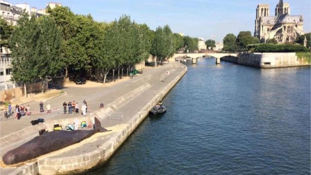 CACHALOT PARIS quai de la Tournelle