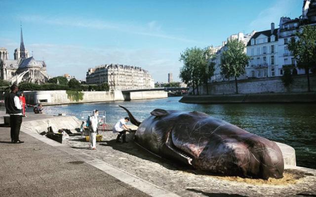 ParisBaleine-quais